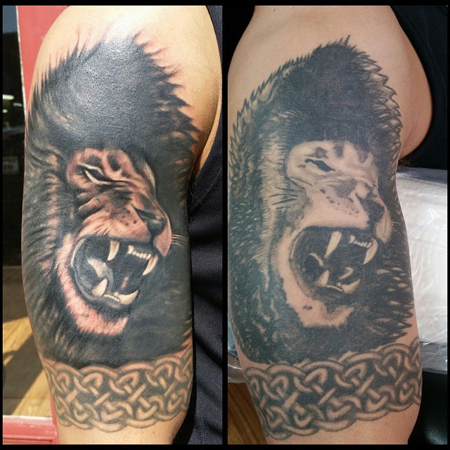 Black and gray lion fixup by Chico Lou's Fine tattoos in Athens, GA