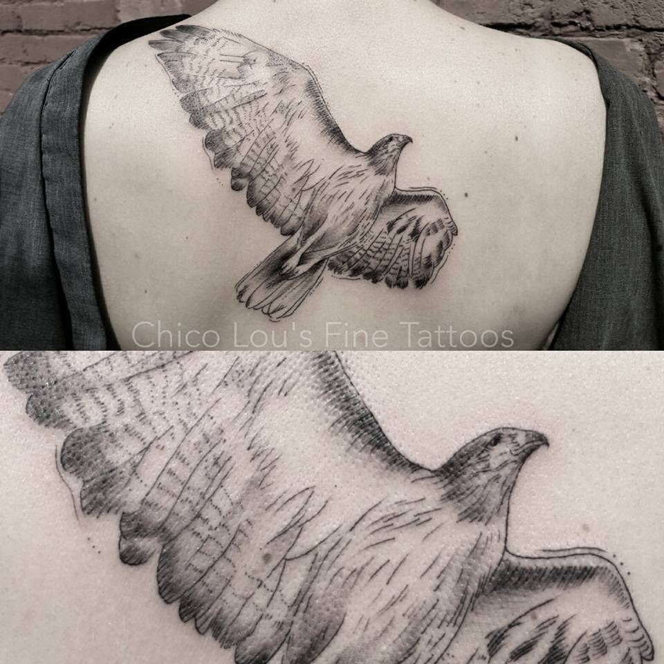 Blackwork hawk by Chico Lou's Fine Tattoos shop in Athens Georgia GA. Artist - Sara Fogle