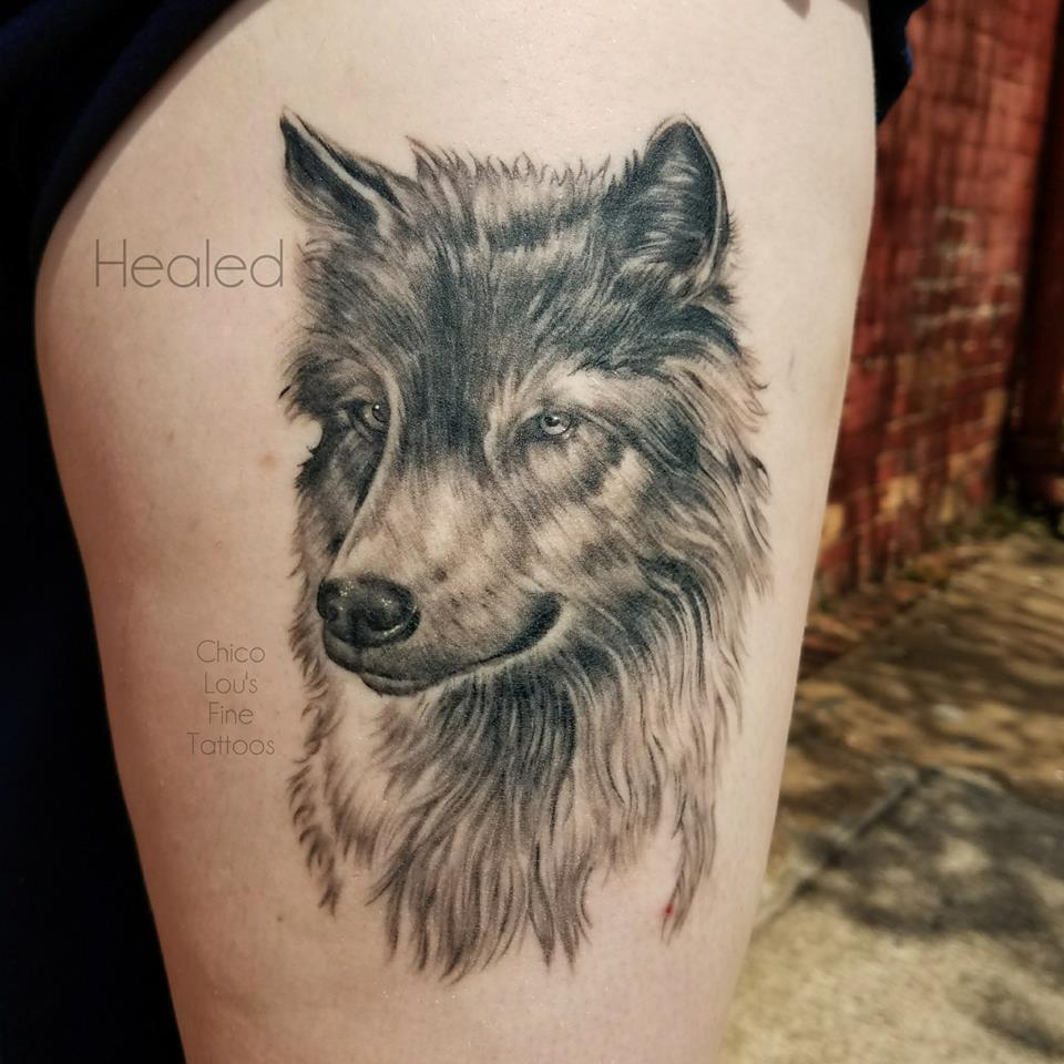 Healed wolf dog by Chico Lou's Fine Tattoos shop in Athens Georgia GA. Artist - Sara Fogle
