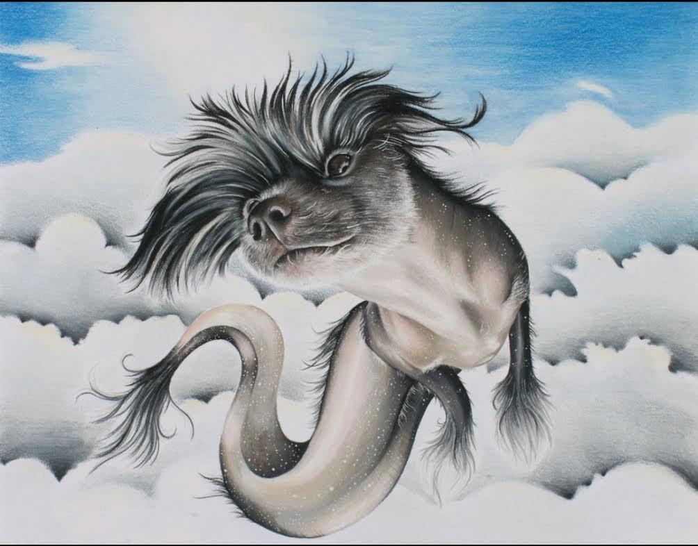 Diddy Dragon by Sara M Fogle