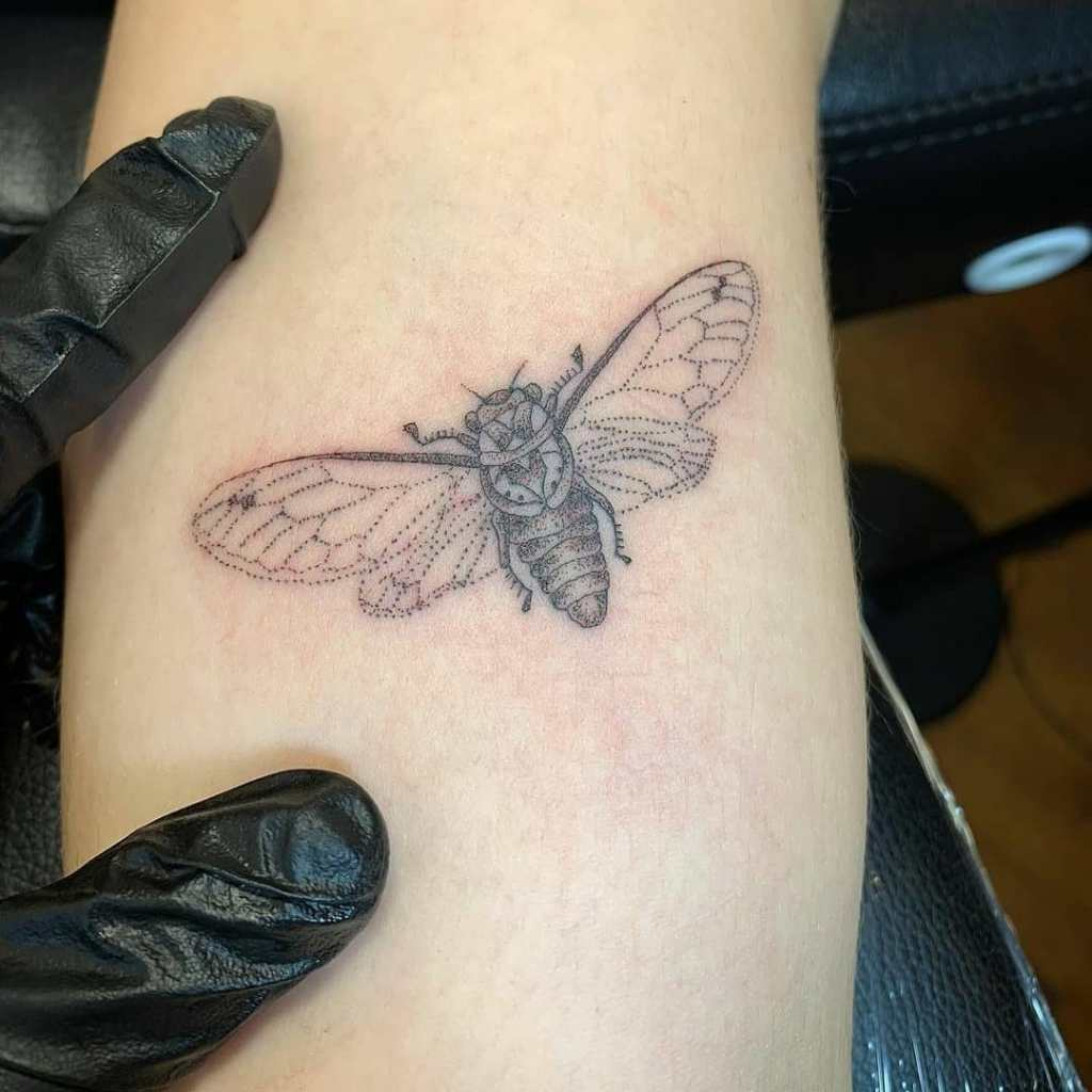 Cicada by Chico Lou's Fine Tattoos studio in Athens Georgia GA. Artist - Darya Kalantari